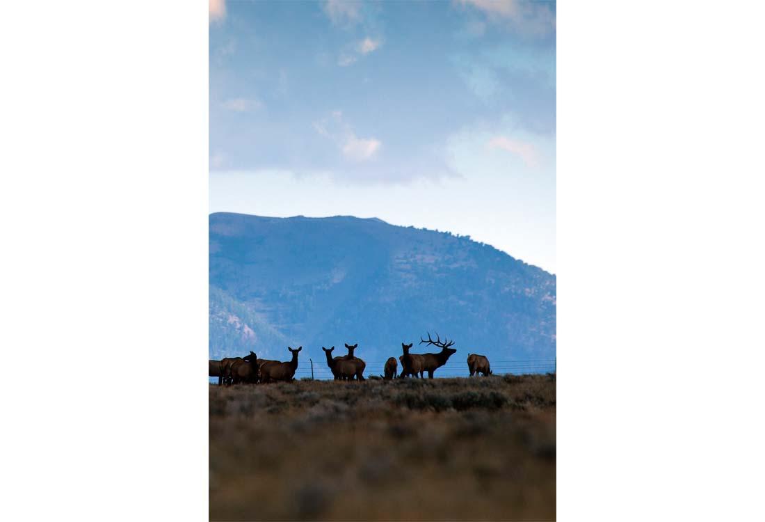 Simpson-Creek-Ranch-16